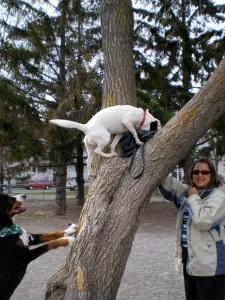 Saku, l'acrobate écureuil en spectacle pour Marie-Hélène et Tonka - le chien de Frank. Scène croquée au Parc Lafond, à Rosemont.