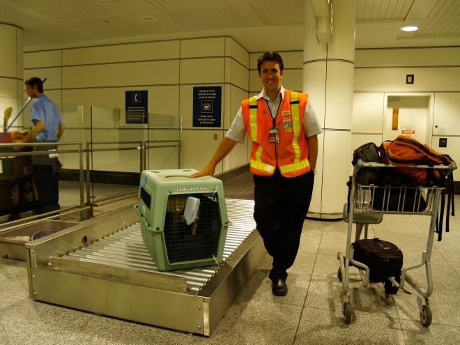 Le retour de Saku à Montréal, 20 août 2009, sous les bons soins du personnel de Wesjet. Photo: Jacinthe Tremblay