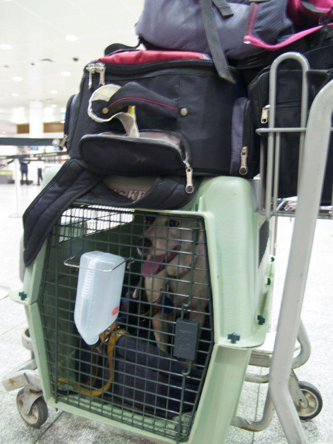 Saku dans la file d'attente au comptoir d'Air Canada à Dorval, le 24 juillet 2005. Un peu comme dans le film La Haine : jusqu'ici, tout va bien.