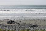 Vagues de jours calmes à St.Shotts, Terre-Neuve